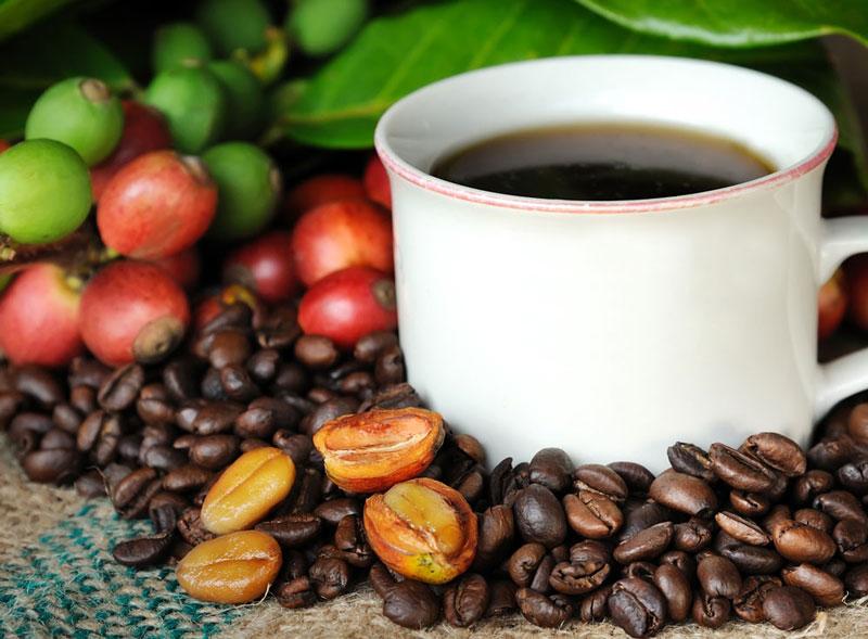 2. Cà phê Hawaii Kona. Là loại cà phê Arabica được trồng ở độ cao hơn 600m so với mực nước biển tại sườn dốc của núi Mauna Loa và Hualalai ở Hawaii, Mỹ. Loại cà phê này được biết đến với hương vị phong phú nhưng nhẹ nhàng và tinh tế.
