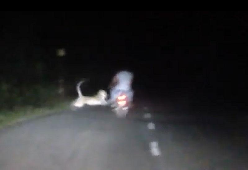 Hổ dữ vồ người đi xe máy.