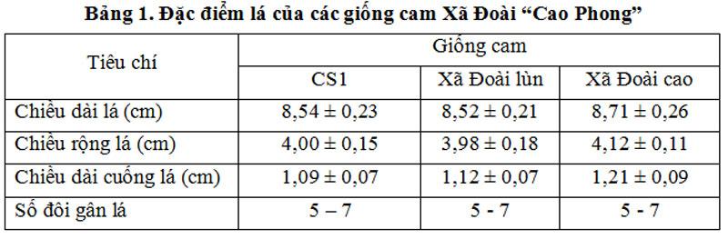 """Đặc điểm lá của các giống cam Xã Đoài """"Cao Phong"""""""
