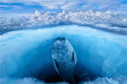 10 bức ảnh tuyệt vời về những vùng đất băng giá vĩnh cửu - 1