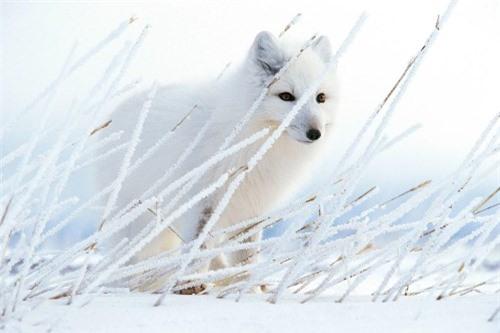 10 bức ảnh tuyệt vời về những vùng đất băng giá vĩnh cửu - 3