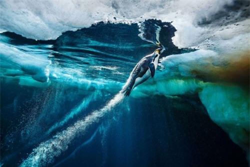 10 bức ảnh tuyệt vời về những vùng đất băng giá vĩnh cửu - 4