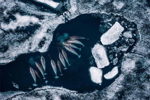 10 bức ảnh tuyệt vời về những vùng đất băng giá vĩnh cửu - 5
