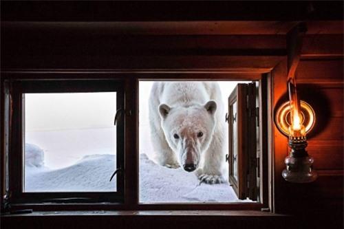 10 bức ảnh tuyệt vời về những vùng đất băng giá vĩnh cửu - 8