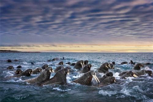 10 bức ảnh tuyệt vời về những vùng đất băng giá vĩnh cửu - 9