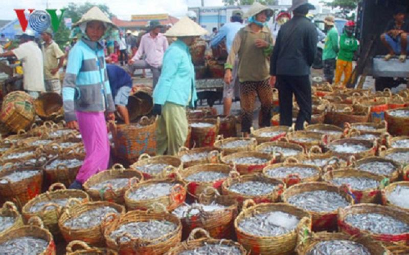 Cảnh người dân thu mua cá làm nguyên liệu sản xuất nước mắm. Ảnh: VOV