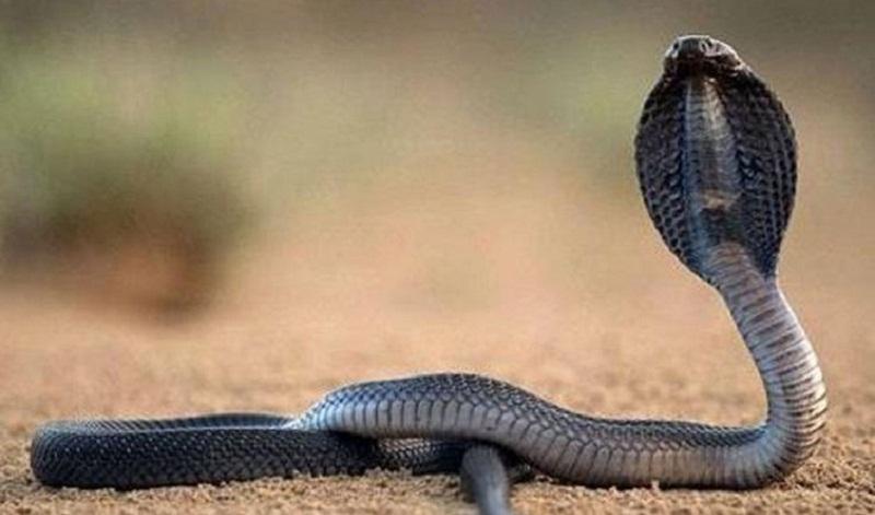 Mùa hè là mùa rắn sinh sôi và phát triển. Ảnh minh họa.