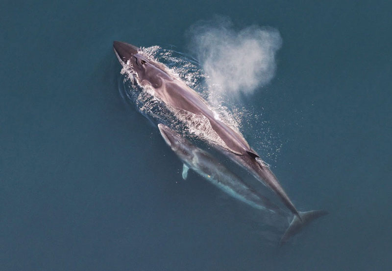 =6. Cá voi Sei - chiều dài: 16m. Loài cá voi thuộc bộ cá voi tấm sừng, thuộc họ cá voi lưng xám. Nó sinh sống chủ yếu ở các đại dương và các vùng biển liền kề, ưa thích vùng biển ngoài khơi nước sâu.