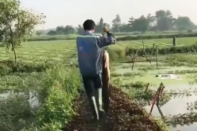Nam thanh niên xách cá trê trên tay.