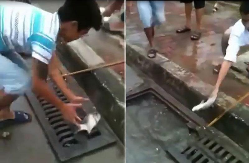 Bắt cá mè trên đường phố Hà Nội.