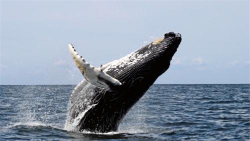 Hóa thạch 36,4 triệu năm khiến các nhà khoa học cân nhắc lại thuyết tiến hóa của cá voi - 2
