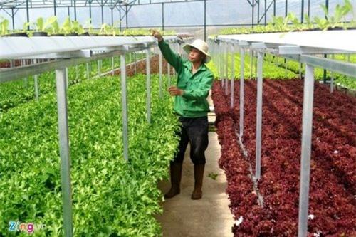Trang trại rau hai tầng không cần đất ở Đà Lạt - 1