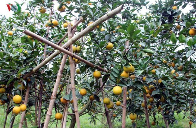 Cam Xã Đoài có mùi vị thơm ngon nên được truyền qua nhiều thế hệ, được trồng ở xã Nghi Diên, huyện Nghi Lộc, Nghệ An. Điều đặc biệt là chỉ có đất ở vùng Xã Đoài mới trồng được loại cam này và cho vị ngon đặc trưng.