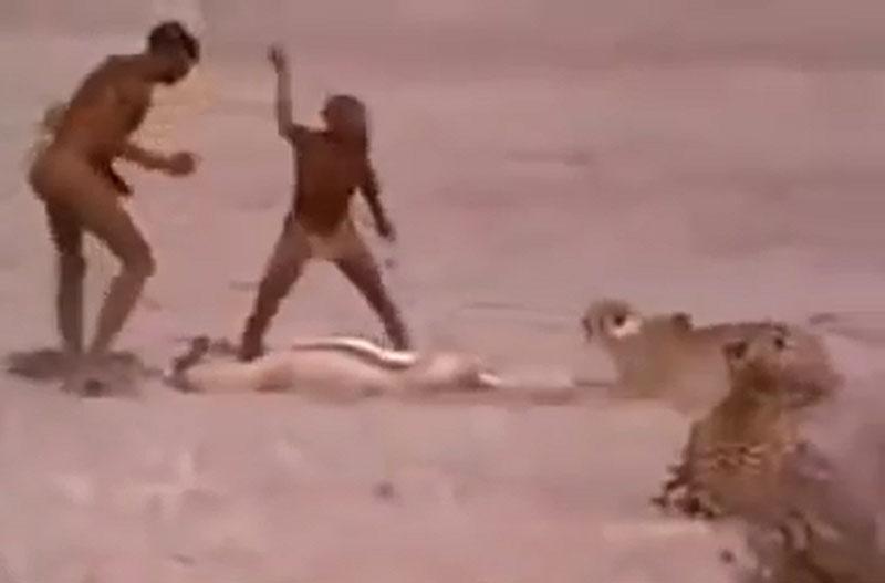 """Hai người thổ dân châu Phi trong đoạn video dưới đây đã khiến nhiều người phải """"khiếp vía"""" khi liều mạng cướp xác chú linh dương từ hai con báo săn."""