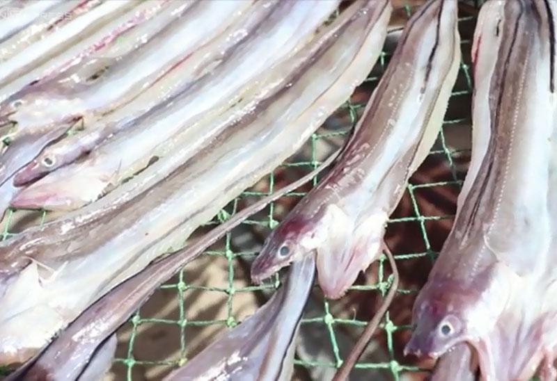 Ngư dân Phú Yên làm giàu từ đặc sản cá đét. Với mức giá có thể lên đến 100.000 VNĐ/kg, làm cá đét khô đang là một trong những nghề giúp ngư dân Phú Yên có nguồn thu nhập ổn định. (CHI TIẾT)