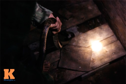 """Theo chân """"thợ săn"""" đi bẫy rắn độc - 14"""