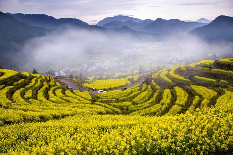 Cánh đồng hoa cải vàng tô điểm cho phong cảnh phố núi.