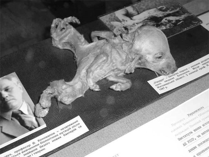 Thanh pho Pripyat sau tham hoa hat nhan khung khiep-Hinh-5