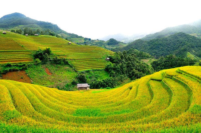 Ruộng bậc thang ở đồi Mâm Xôi được cho là đẹp nhất. Ảnh: Diem Dang Dung.