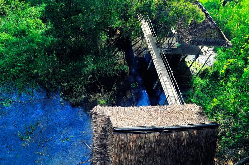Theo kết quả khảo sát của BirdLife International và Viện Sinh thái và Tài nguyên sinh vật, rừng tràm Trà Sư được đánh giá là nơi có tầm quan trọng quốc tế trong công tác bảo tồn đất ngập nước tại đồng bằng sông Cửu Long. Ảnh: Diem Dang Dung.