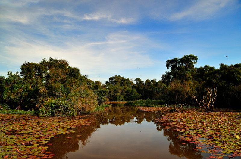 Chính sự đa dạng và phong phú về tài nguyên khiến rừng tràm Trà Sư trở thành điểm đến lý tưởng đối với các nhà nghiên cứu và những người ham mê khám phá thiên nhiên hoang dã. Ảnh: Diem Dang Dung.