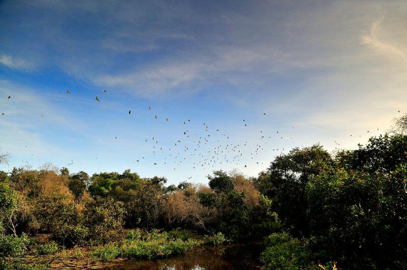 Mùa nước nổi (khoảng tháng 8 đến tháng 10 Âm lịch) là quãng thời gian thích hợp nhất để đến với rừng tràm. Ảnh: Diem Dang Dung.