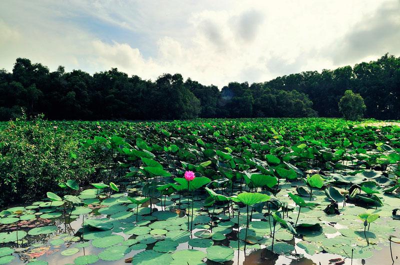 Rừng tràm Trà Sư nằm trên địa bàn xã Văn Giáo, huyện Tịnh Biên, tỉnh An Giang. Ảnh: Diem Dang Dung.