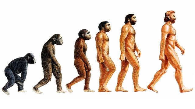 Thuyết tiến hóa bị loại khỏi sách giáo khoa Thổ Nhĩ Kỳ. Ảnh minh họa.