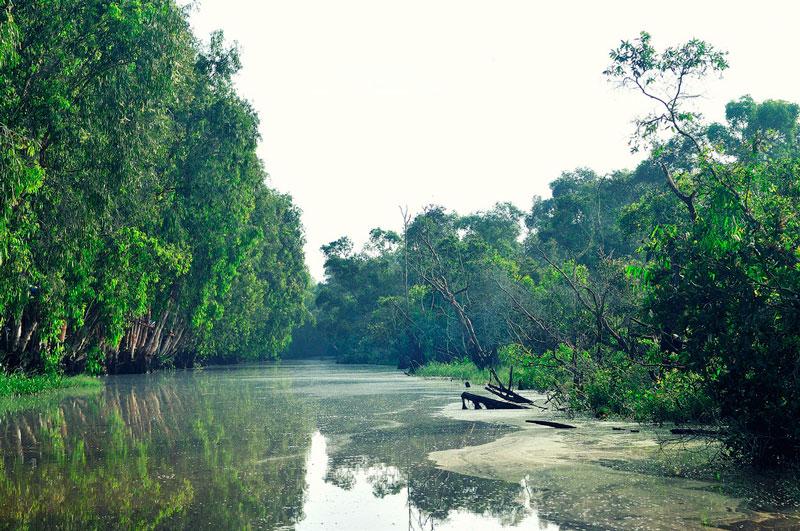 Đây là khu rừng ngập nước tiêu biểu cho vùng Tây sông Hậu, là nơi sinh sống của nhiều loài động vật và thực vật thuộc hệ thống rừng đặc dụng Việt Nam. Ảnh: Diem Dang Dung.
