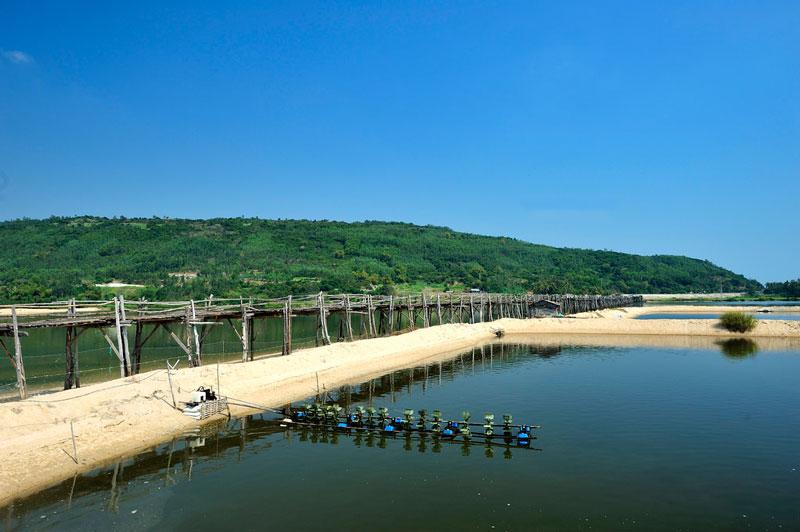 Cầu Ông Cọp dài khoảng 400m, chủ yếu được làm từ gỗ và tre, duy chỉ có các đinh tán được làm bằng sắt. Ảnh: Diem Dang Dung.
