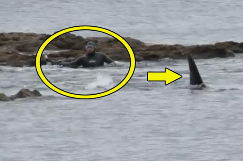 Bầy cá voi sát thủ vây bắt thợ lặn.