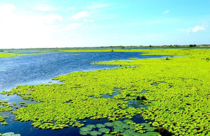 Vườn quốc gia U Minh Thượng thuộc tỉnh Kiên Giang. Ảnh: WWF.
