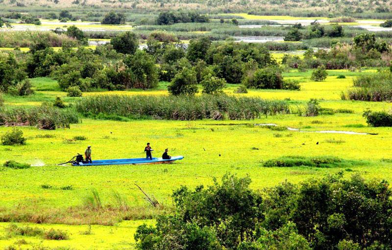 Cân bằng sinh thái, tăng độ che phủ của rừng, đảm bảo an ninh môi trường và sự phát triển bền vững của đồng bằng sông Cửu Long, đồng thời phát huy giá trị của hệ sinh thái rừng tràm phục vụ nghiên cứu khoa học và tham quan, du lịch sinh thái.Ảnh: WWF.