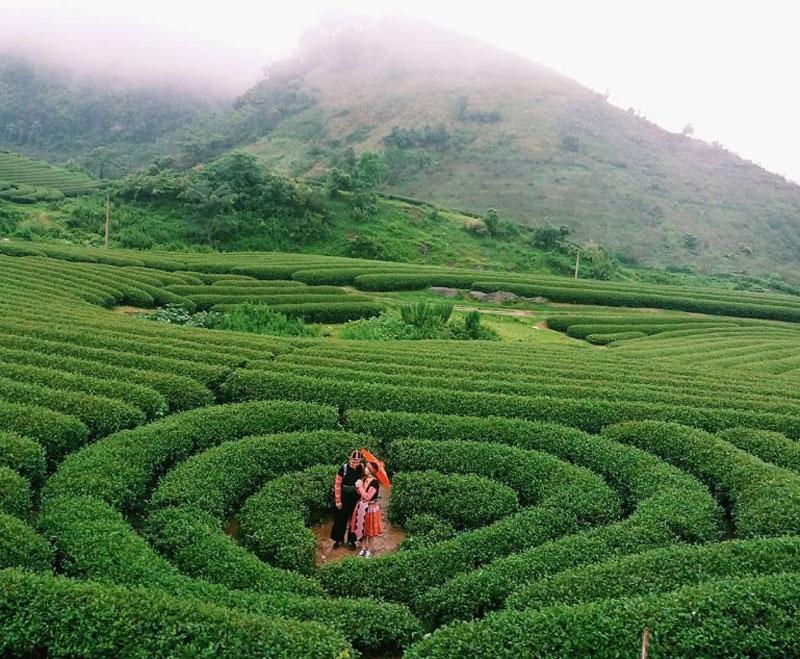 Đây là đồi chè của khu nông trường liên doanh với Đài Loan (Trung Quốc). Ảnh: Neko.Channn.