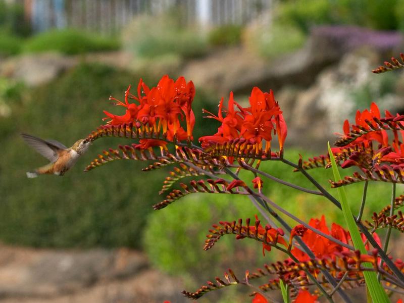 Nhiệt độ thích hợp cho cây nghệ hương là 18 - 23 độ C, nhiệt độ cho phân hoá chồi là 8 – 13 độ C, hoa phát triển ở 13 - 18 độ C.