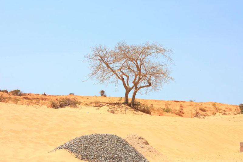 Đến gần hơn khu vực trung tâm, du khách sẽ thấy được cồn cát và nhiều mảng xanh của cây cỏ, mật độ phủ dày hơn đoạn đường lúc trước. Ảnh: Annie Le.