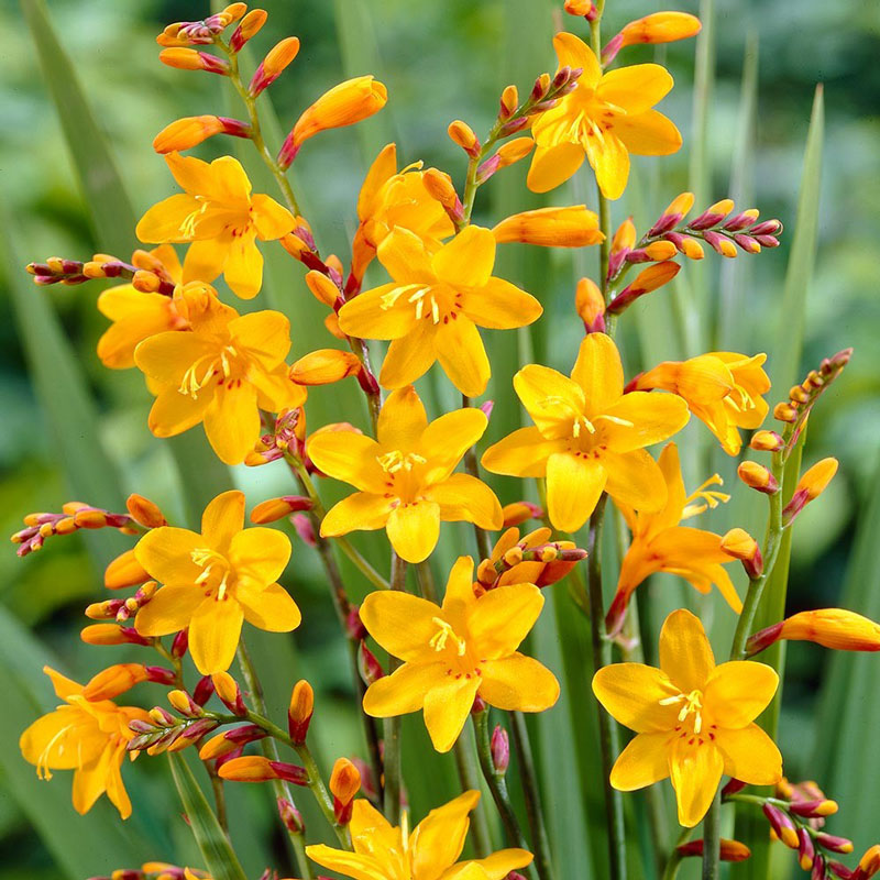 Thân hoa mọc một bên thân chính, hình dáng đặc biệt.