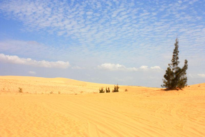 Vào mùa khô, cao nguyên Hòa Thắng như một tiểu hoang mạc khô cằn mà đầy quyến rũ. Ảnh: Annie Le.
