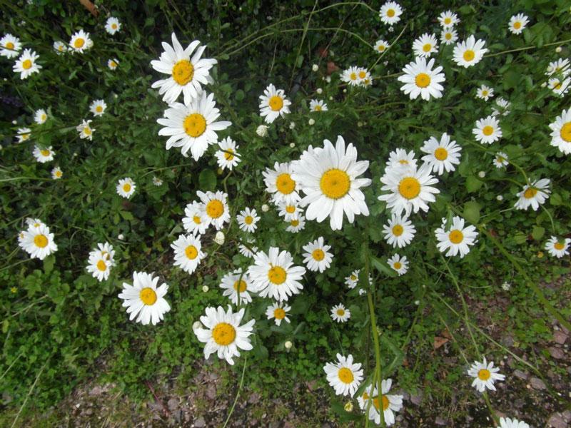 Hạt thường rụng xuống và có khi 2 - 3 năm sau cây con mới mọc.