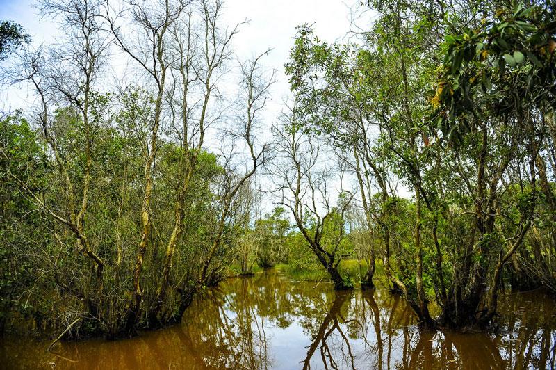 Vườn quốc gia Tràm Chim là nơi cư trú của trên 100 loài động vật có xương sống, 40 loài cá và 147 loài chim nước. Trong đó, có 13 loài chim quý hiếm của thế giới. Đặc biệt là một loài chim hạc còn gọi là sếu đầu đỏ (Grus antigone) hay sếu cổ trụi. Ảnh: Minh Đức.