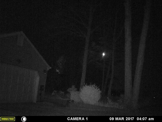 Vật thể lạ nghi UFO được phát hiện vào ngày 5/5/2017, vào một buổi tối gần nhà, giáp khu rừng ở New Jersey do một nhân chứng tình cờ chụp lại bằng máy ảnh hồng ngoại có sẵn. Nguồn ảnh: ufosightingsdaily.