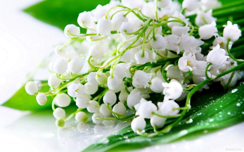 Loài hoa này cũng có giá cả rất đắt đỏ.