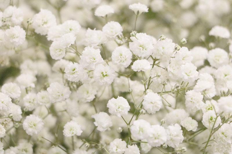 Hoa thường được sử dụng để trang trí nhà cửa, sân vườn, tiệc tùng, lễ Tết…