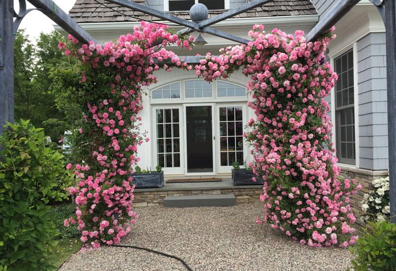 Trồng hoa hồng leo ở vòm cổng cũng rất đẹp. Ảnh minh họa.