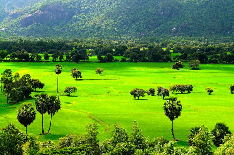 Cánh đồng Tà Pạ nằm cách thị trấn Tri Tôn, An Giang khoảng 1 km. Ảnh: Diem Dang Dung.
