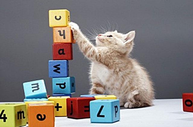 Một số động vật có khả năng đếm và thực hiện phép tính. Ảnh: Think Stock.
