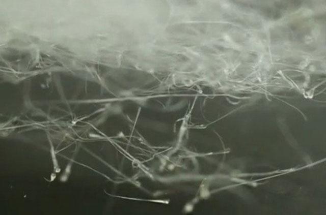Máy kẹo bông của các nhà khoa học Mỹ có thể xe sợi polymer siêu mảnh.