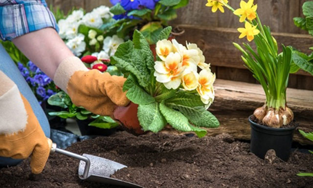 Người Italy quan niệm hoa sẽ nở đẹp hơn nếu trồng lúc nhật thực. Ảnh: Mllbz.