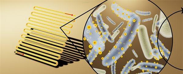 Vi khuẩn này sẽ là nguồn năng lượng mới của thế giới - 1