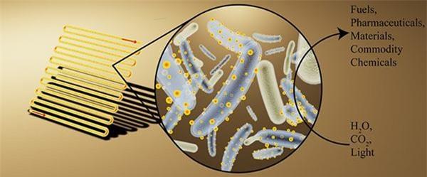Vi khuẩn này sẽ là nguồn năng lượng mới của thế giới - 2